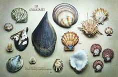 Prettier shell