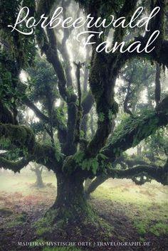 Madeiras mystische Orte: der Lorbeerwald Fanal