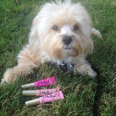 Highlights from Too Faced at the Best Friends 5th Annual Strut Your Mutt Walk #crueltyfree