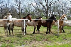 """SAVE THE HORSES- Chief Riley Ranch My friend Sallie, a citizen of Cherokee Nation is running a rescue for unwanted horses on her ancestral (""""Little Chief Riley"""") homestead in Oklahoma. She has rescued 14 horses from slaughter and neglect. There are more to rescue, but she pays slaughterhouse """"..."""