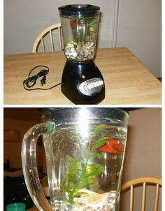 Non-Functioning Blender Betta Fish Tank | 8 Household Items Begging You To Turn Them Into Aquariums Instructables.com