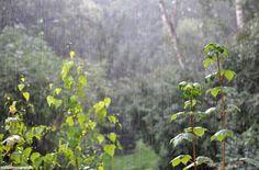 """photo: Babette Fischer """"Rainy day"""" http://notquitesnowwhite.com"""
