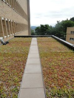 Sedum roof Sedum Roof, Green Roof System, Built Environment, Landscape Architecture, Sidewalk, Park, Planting, Building, House Ideas