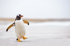 To brighten your day here are 20 fun facts on penguins!     http://mentalfloss.com/article/56416/20-fun-facts-about-penguins-world-penguin-day