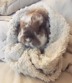 Cute bunny, wrapped.