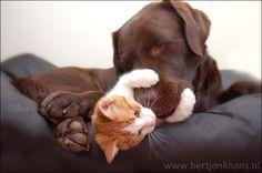 Friends by Bert Jonkhans on 500px