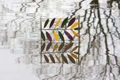 Laurel Reflections by escher is still alive, via Flickr