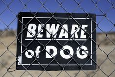 Should You Buy a Security Guard Dog? - Spy Escape and Evasion Security Guard, Guard Dog, Police Sergeant, Dog Attack, News Around The World, Family Dogs, Bee, Central California, Infant