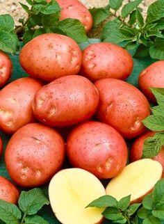 # vegetables # Fruit And Veg, Fresh Fruit, Sante Bio, Vegetable Pictures, Legume Bio, Fruit Picking, Cooking Ingredients, Fruits And Vegetables, Food Photo