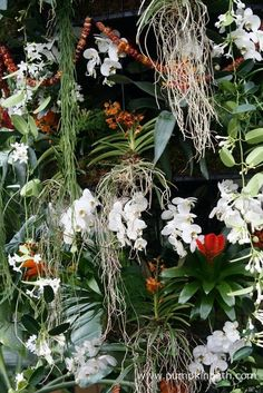 Behind the Scenes at the Kew Orchid Extravaganza 2017 - Pumpkin Beth Kew Gardens, Botanical Gardens, Exotic Plants, Orange Flowers, Growing Plants, The Good Place, Orchids, Behind The Scenes, Sculptures