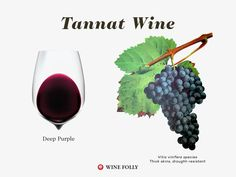 Tannat wine color and grapes illustration by Wine Folly
