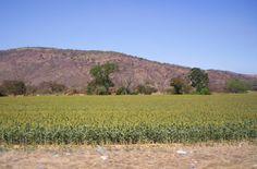 Zona Agrícola, Villa de Cura