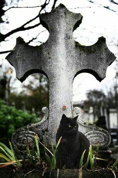 Los gatos guardianes del más allá!