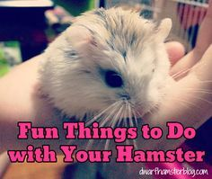 Share on Tumblr There are lots of fun things that you can do with your hamster. Here are a few ideas that will be fun for you and your furry little friend! Use your body! Let your buddy crawl on you, and it will let him get to know you better by allowing him to …