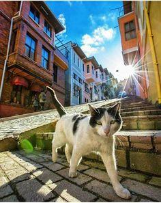 #Balat sokaklarında kaybolmamışsan #İstanbul'u gezdim demeyeceksin.