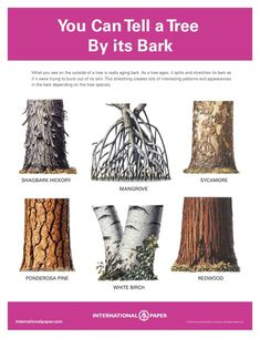 Site with great free printables about identifying trees by bark, leaves, etc. Would be great for a nature study. great for the Cadette tree badge Outdoor Education, Outdoor Learning, All Nature, Nature Study, Nature Activities, Science Nature, Plant Science, Camping Survival, Survival Skills