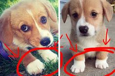 Sorry, But Dogs With Sock Feet Are Undoubtedly The Greatest Thing On Earth