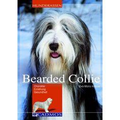 Bearded Collie - Hunde