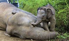 Getty Photo.  Ban Ivory Sales -- All of Them
