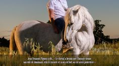 Jean François Pignon à dit... « Le cheval a besoin que l'homme tienne son rôle de dominant, cela le rassure et si on est fort, on est aussi protecteur ».