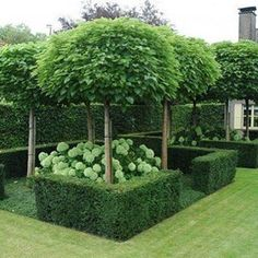 Topiaries, Hedges and Hydrangeas looks like a perfect garden #eddiezaratsianlifestyle #garden #gardendesign #hydrangeas #hedge #topiaries