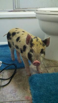 Our new pet pig! We named it Belly<3