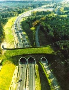 Animal Bridge, Highway A50, Netherlands ( Animals have to cross transport links too ) ✔️