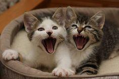 O homem não sabe ver o gato, mas o gato sabe ver o homem. Se há desarmonia real ou latente, o gato sente. Se há solidão, ele sabe e atenua como pode (ele que enfrenta a própria solidão de maneira muito mais valente que nós).
