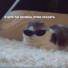 Memes Funny Faces, Stupid Funny Memes, Funny Relatable Memes, Hello Memes, Happy Memes, Russian Memes, Funny Mems, Cute Love Memes, Got Memes