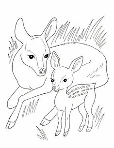 Exciting Printable Animal Pictures Of Wild Animals Coloring Pages 9 - Free Clipart Deer Coloring Pages, Unique Coloring Pages, Online Coloring Pages, Adult Coloring Pages, Free Coloring, Printable Animal Pictures, Printable Animals, Printable Crafts, Free Printable