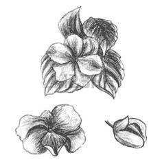 tekening+bloem%3A+Hand+getrokken+balsems+in+verschillende+stadia+van+groei%2C+vlijtig+liesje%2C+knop+en+tot+bloei+gekomen+bloem+met+bladeren%2C+leuke+bloemen+schets%2C+vector+illustratie