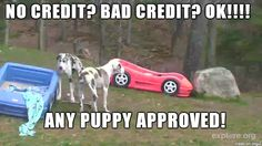 No credit? Bad credit? Ok! Any puppy approved! Lol! #carmeme