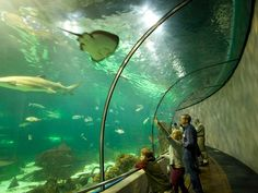 <p>Photo: The Oceanarium</p>