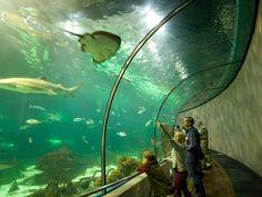 <p>Photo: The Oceanarium</p>