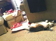30 Christmas Funny Pictures of Cats
