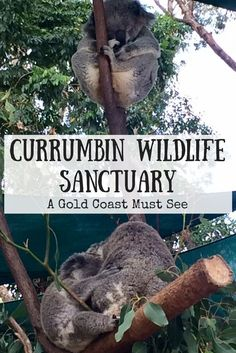 Josie Wanders | Currumbin Wildlife Sanctuary – A Gold Coast Must-See | Looking for a great day out for the whole family? Currumbin Wildlife Sanctuary is the answer. You will meet all sorts of native Australian animals, and even have the chance to hold a koala like I did!: