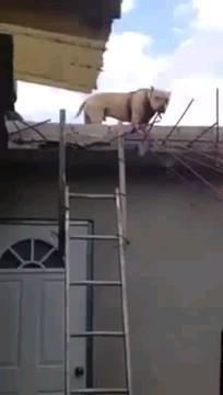Funny Animal Videos, Cute Funny Animals, Funny Animal Pictures, Animal Memes, Funny Cute, Funny Dogs, Funny Farm, Cute Gif, Cute Puppies