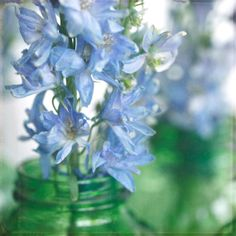 Fine Art Photography-Floral Photography-Nature- Spring--Feminine- Blue-Green-Delphiniums-Fragile 8x8 print via Etsy