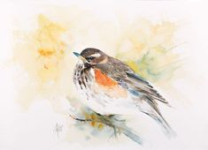 Buy Redwing, Watercolour by Andrzej Rabiega on Artfinder. Discover thousands of other original paintings, prints, sculptures and photography from independent artists.