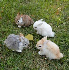 Easter & Spring Realistic Artificial Rabbit Lifelike Easter Bunny Furry Animal Spring Figurine K & Garden Super Cute Animals, Cute Baby Animals, Animals And Pets, Funny Animals, Baby Bunnies, Cute Bunny, Easter Bunny, Dwarf Bunnies, Kawaii