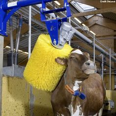 Automatic cow wash.