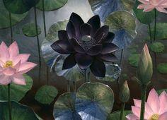 Steven Belledin - Black Lotus