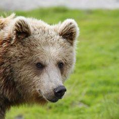 Bjørneparken Flå