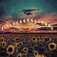 gif trippy drugs lsd moon acid psychedelic trip flowers nature hallucinate trip with me Psychedelic Art, Image Citation, Psy Art, Hippie Life, Favim, Ciel, Creepy, Illustration, Scenery