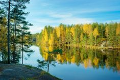 Näin metsä hoitaa mieltäsi | Kodin Kuvalehti
