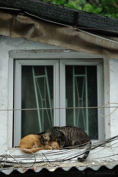 Cats in Hong Kong