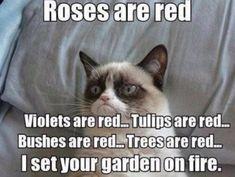 😭grumpy cat died😭R. Grumpy Cat😭 I'll miss this legend😥 Grumpy Cat Quotes, Funny Grumpy Cat Memes, Funny Cats, Funny Animals, Funny Jokes, Grumpy Cats, Animal Memes, Dog Memes, Adorable Animals