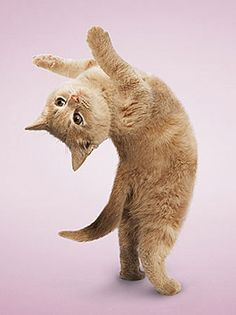 Pet Yoga : Photo by Dan Borris visit website  : http://yogayourwaytohealth.blogspot.com