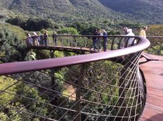 The Boomslang at Kirstenbosch