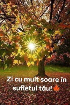 Spiritual Quotes, Motto, Good Morning, Spirituality, Floral, Plants, Bible, Blue Prints, Rome
